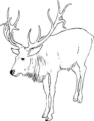 Раскраска «Северный олень», распечатать бесплатно
