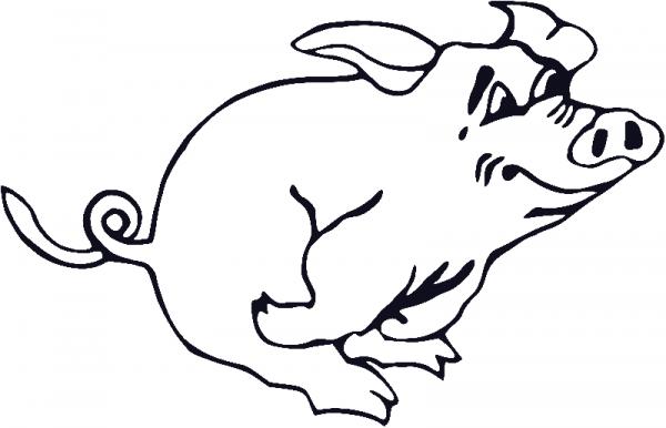 Раскраска бегущая свинья
