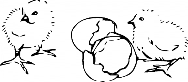 Петух Картинка Раскраска Для Детей