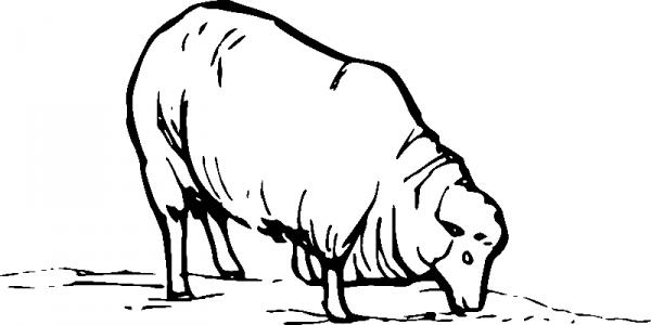 Раскраска овечка кушает