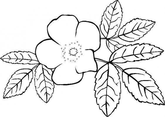 Игры раскраски роза