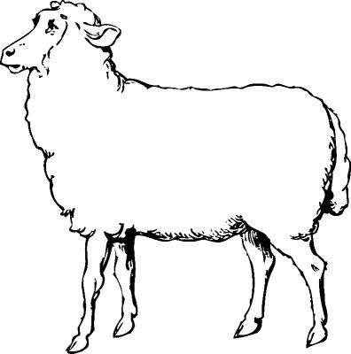 Раскраска «Задумчивая овца», распечатать бесплатно