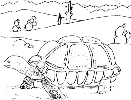 Раскраска «Черепаха в пустыне», распечатать бесплатно
