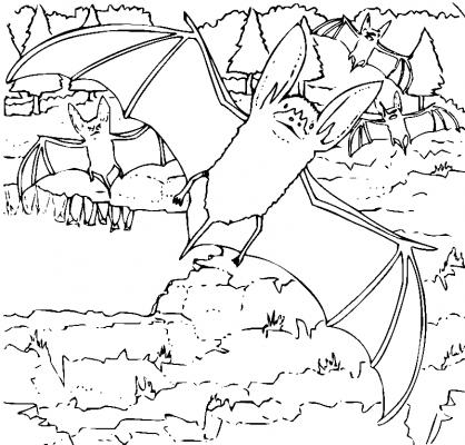 Раскраска «Летучие мыши», распечатать бесплатно